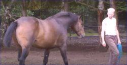Idyl eller hård træning på landet. Joel Schytt træner vilde heste.